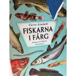 FISKARNA I FARG